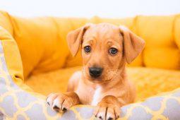 40 Ideias de decoração e espaço para os Pets