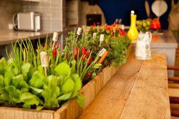8 dicas simples para montar sua horta em casa