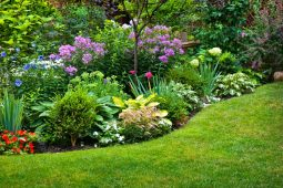 5 plantas herbáceas para colorir o seu jardim